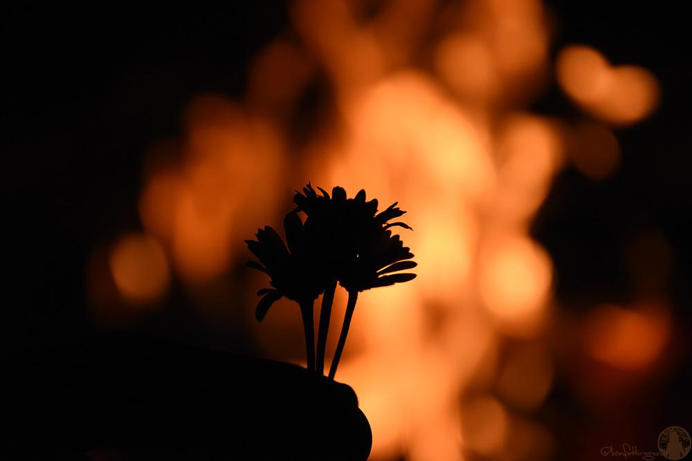 Bildergebnis für blumen feuer